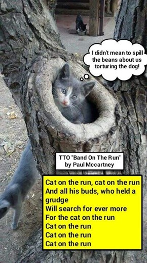 """Cat On The Run"" (TTO ""Band On The Run"" by Paul Mccartney)  (recaption: http://tinyurl.com/grp2lo8"