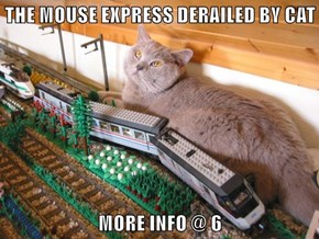 THE MOUSE EXPRESS DERAILED BY CAT  MORE INFO @ 6