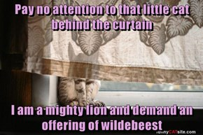 Pay no attention to that little cat behind the curtain  I am a mighty lion and demand an offering of wildebeest
