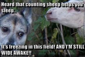 Heard that counting sheep helps you sleep..  It's freezing in this field! AND I'M STILL WIDE AWAKE!!