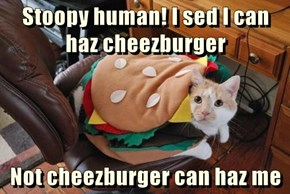 Stoopy human! I sed I can haz cheezburger  Not cheezburger can haz me