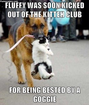 FLUFFY WAS SOON KICKED OUT OF THE KITTEH CLUB  FOR BEING BESTED BY A GOGGIE