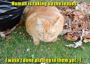 Human is raking up the leaves       I wasn't done playing in them yet :-(