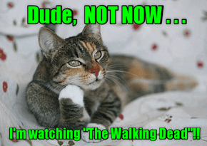 Not Now, The Walking Dead Is On!!