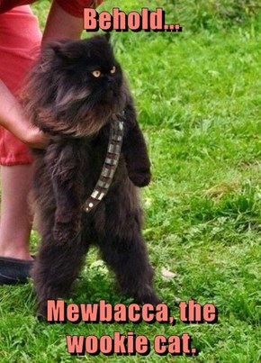 Behold...  Mewbacca, the wookie cat.