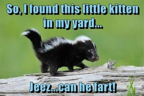 So, I found this little kitten in my yard...  Jeez...can he fart!