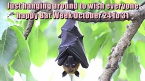 Just hanging around to wish everyone happy Bat Week October 24 to 31