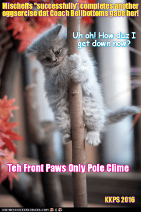 Rio LoLympics: Sweet Mischeffs duz a grate job ob doing teh difficult Pole Clime wiff just her front paws, but den runs into a purrplexing problems!