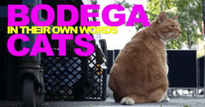 'Bodega Cats in Their Own Words' Is an Adorable Video Series Starring New York's Best Felines
