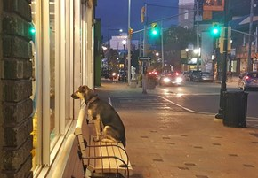 Loyal Dog Waits Patiently for Its Owner to Finish Shopping