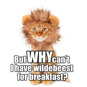But WHY can't I have wildebeest for breakfast?