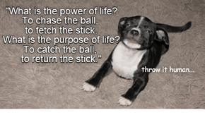Inspirational Yoga Quotes #4