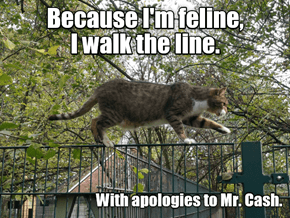 No appologies needed, kitteh