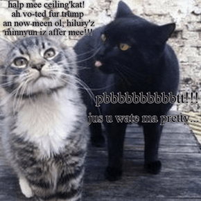 heer ma plee oh wunnerfulceilin' kat!!!
