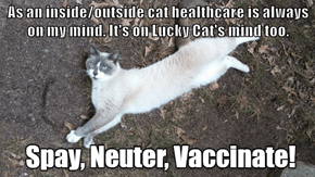 As an inside/outside cat healthcare is always on my mind. It's on Lucky Cat's mind too.