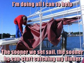 I'm doing all I can to help  The sooner we set sail, the sooner he can start catching my dinner