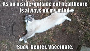As an inside/outside cat healthcare is always on my mind.   Spay. Neuter. Vaccinate.