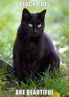 BLACK CATS  ARE BEAUTIFUL