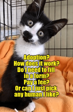 Up for adoption?
