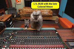 L'IL BUB & Colonel Meow (recaption: http://tinyurl.com/zoewpfr