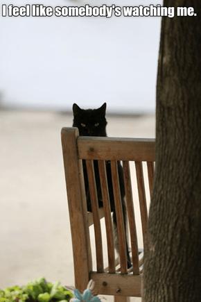 I feel like somebody's watching me