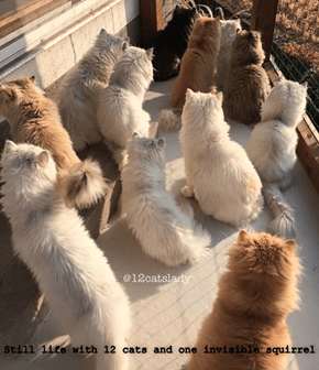 Still life with 12 cats and one invisible squirrel