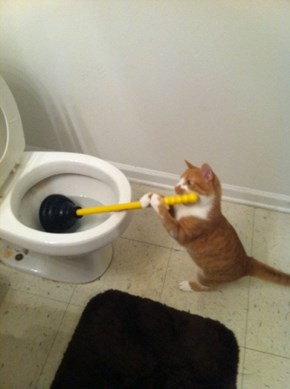 Nobody Ever Helps Me in This House