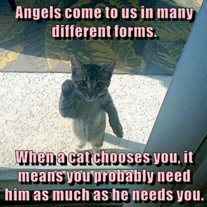 Angels come to us in many different forms.  When a cat chooses you, it means you probably need him as much as he needs you.