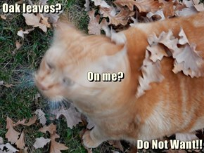 Oak leaves?    On me?  Do Not Want!!