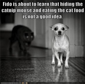 Fido is about to learn that hiding the catnip mouse and eating the cat food is not a good idea.