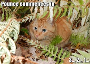 Pounce commences in  3... 2... 1...