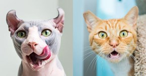 """Cat Photographer"" Has Got to Be in the Running for the Title of Best Job Ever"