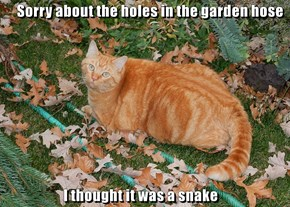 Sorry about the holes in the garden hose                        I thought it was a snake