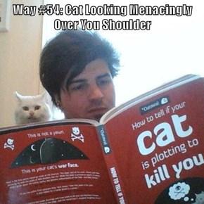 Way #54: Cat Looking Menacingly Over You Shoulder