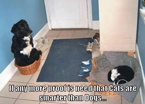 If any more proof is need that Cats are smarter than Dogs...