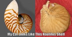 My Cat Looks Like This Nautilus Shell