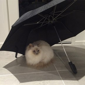 Staying Safe From the Rain Inside
