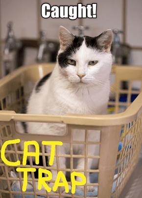 Cat Traps Still Work