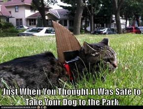 Just When You Thought it Was Safe to Take Your Dog to the Park