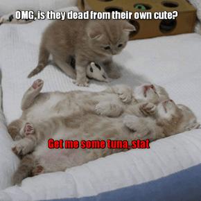 Dr. Tiny Cat Investigates