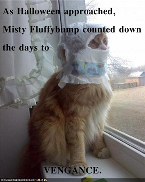 As Halloween approached, Misty Fluffybump counted down the days to  VENGANCE.