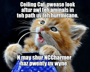 Hurricanes threaten animals too