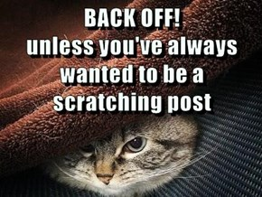 BACK OFF!                                           unless you've always wanted to be a scratching post