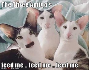 The Three Amigo's   feed me .. feed me .. feed me