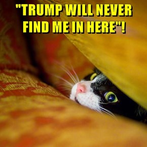 """""""TRUMP WILL NEVER FIND ME IN HERE""""!"""