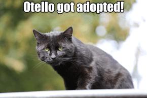 Otello Got Adopted!