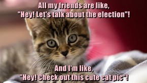 "All my friends are like,                                              ""Hey! Let's talk about the election""!  And I'm like,                                                                            ""Hey! Check out this cute cat pic""!"