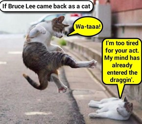 If Bruce Lee came back as a cat   (recaption: http://tinyurl.com/zkvhpnl