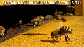 REMEMBER TO WIPE YOUR BEE HOOVES YOUNG MAN