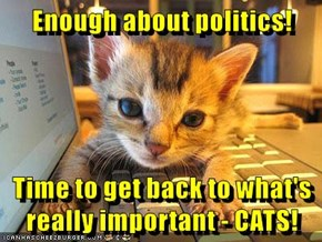 Enough about politics!  Time to get back to what's really important - CATS!
